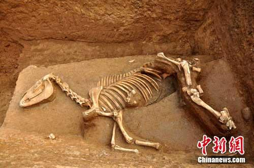 Xia cultural remains found in laoniupo site in shaanxi cctv news experts say the archeological finds in laoniupo site indicate the most western geographical extension of the xia dynasty sciox Image collections