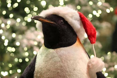 pingouin noel CCTV Les pingouins, aides assistants du Père Noël pingouin noel