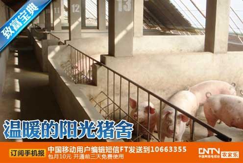 cctv7 科技苑养猪视频,肉猪养殖,温暖的阳光猪舍(2012.04.12)