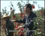 1辽宁省沈阳市辽中县讲解苹果管理中的