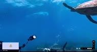 「Google街景」海洋版