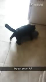 挑战极限 小猫在楼梯上冲浪
