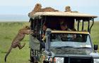 游客偶遇猎豹一家 淡定合影