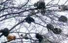 """采摘了!树上结满""""喵果子"""""""