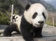 迪斯尼纪录片《诞生于中国》超美预告