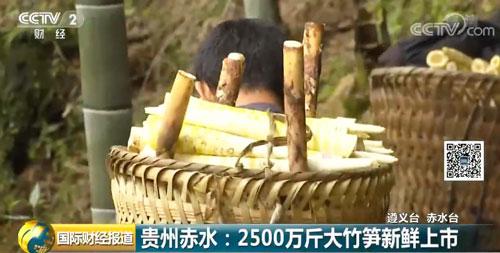 贵州赤水:2500万斤大竹笋新鲜上市
