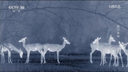 [自然传奇]昼伏夜出 看军用摄影机镜头下的动物世界