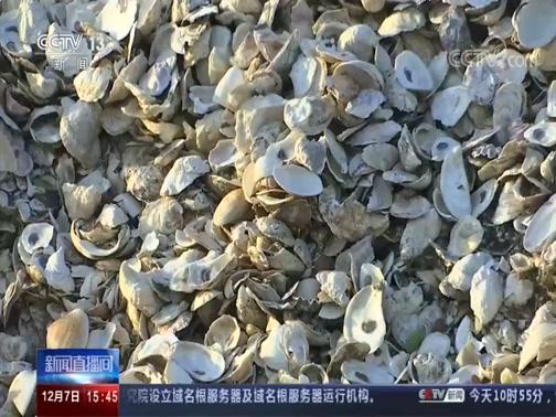 [新闻直播间]美国 不只是美食 牡蛎还能拯救纽约港