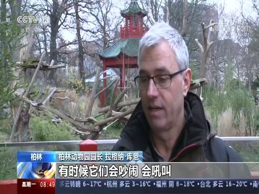 """[朝闻天下]德国 柏林动物园熊猫双胞胎今天过""""百日"""""""