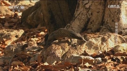 [自然传奇]喷毒液的精准度媲美神枪手!巨蜥和蛇谁更擅用毒?