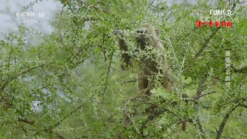 《自然传奇》 20200116 狒狒的多面性