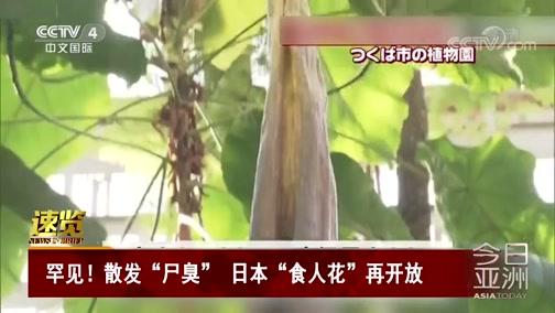 """[今日亚洲]速览 罕见!散发""""尸臭"""" 日本""""食人花""""再开放"""