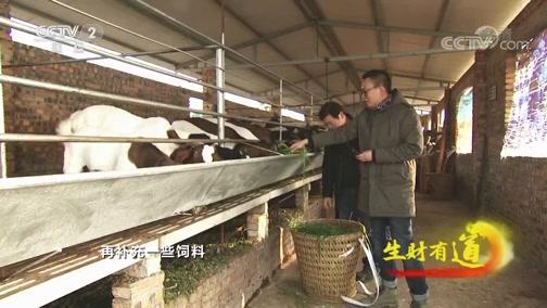 《生财有道》 20200120 美味中国年:味美香甜 丹棱过年