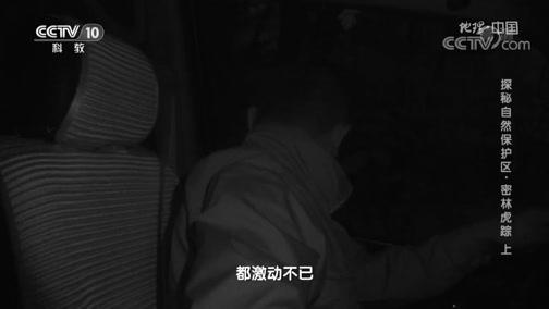 [地理·中国]科考队发现豹猫