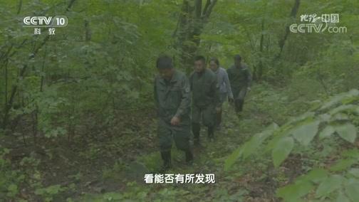 《地理·中国》 20200225 探秘自然保护区·密林虎踪 下