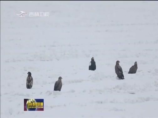 [吉林新闻联播]吉林敬信湿地迎来上万只北归候鸟