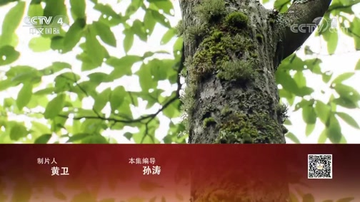 《远方的家》 20200316 世界遗产在中国 北纬31度上的动植物宝库