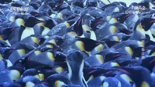 """《自然传奇》 20200514 """"第三只眼""""看企鹅"""