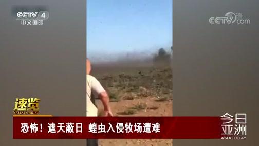 [今日亚洲]速览 恐怖!遮天蔽日 蝗虫入侵牧场遭难