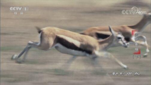 《动物世界》 20200719 追梦赛场(下)