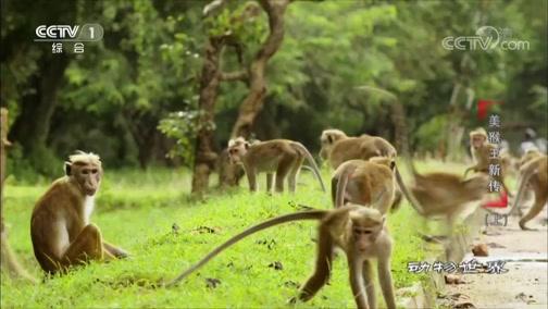 [动物世界]独特的发型造就了每只猴子自己的风格