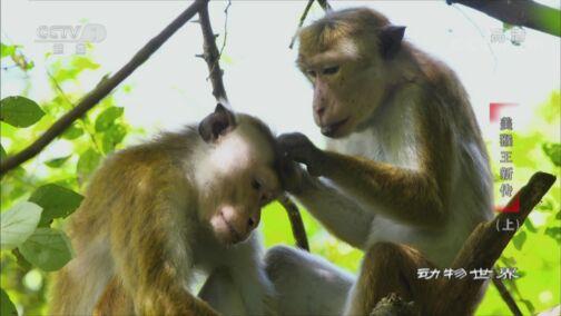 《动物世界》 20200812 美猴王新传(上)