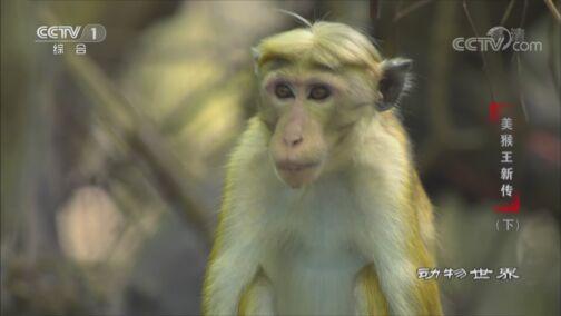 《动物世界》 20200813 美猴王新传(下)