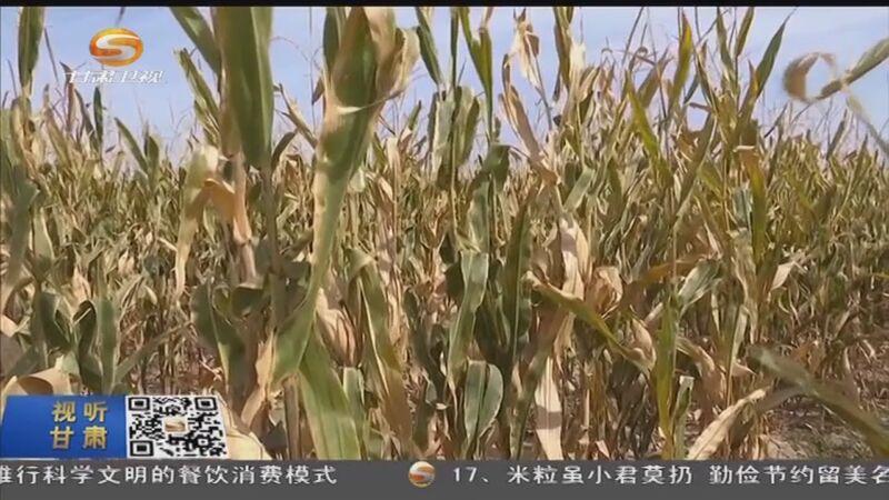 [甘肃新闻]金果秋菜喜丰收 陇上十月美如画