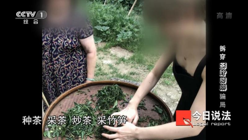 """《今日说法》 20210417 拆穿""""茶叶姑娘""""骗局"""