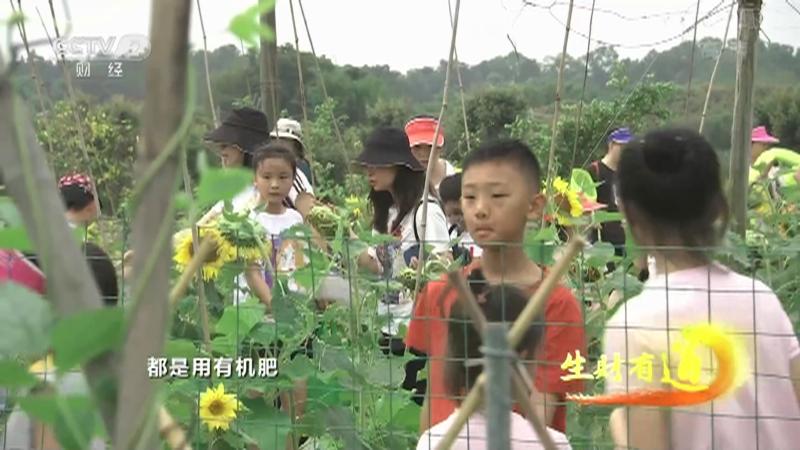 《生财有道》 20210528 乡村振兴中国行:稻田好风光 田园创客忙