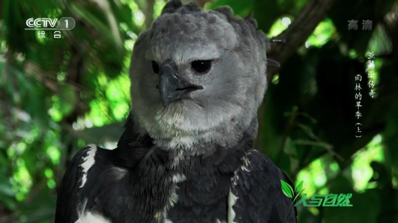 《人与自然》 20210626 亚马逊传奇——雨林的旱季(上)