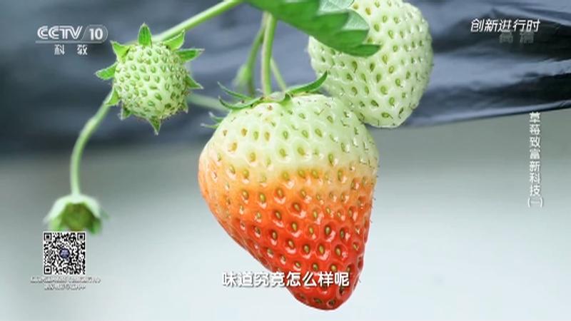 《创新进行时》 20210718 草莓致富新科技(一)