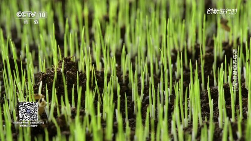 《创新进行时》 20210729 秧绿稻香新科技(二)