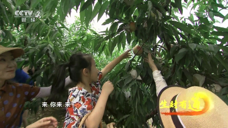 《生财有道》 20210813 乡村振兴中国行——无锡阳山:桃甜 景美 乐生活