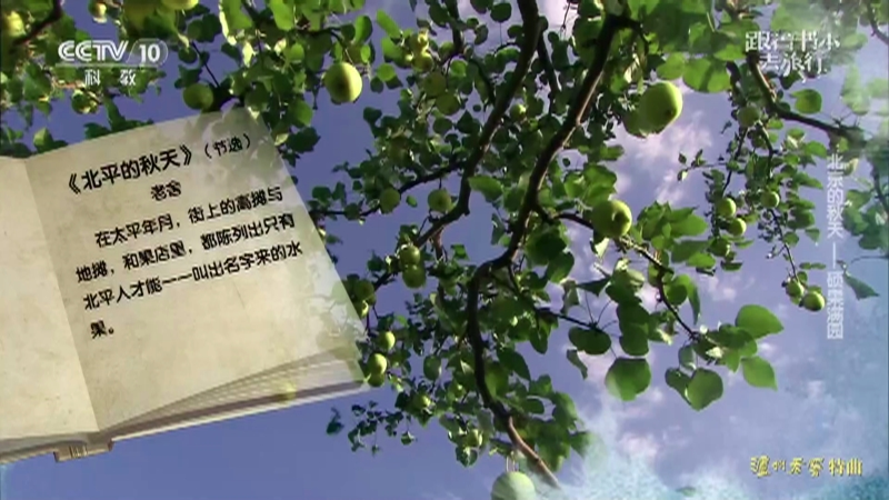 《跟着书本去旅行》 20210922 北京的秋天——硕果满园