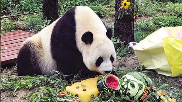 """大熊猫""""飞云""""在辽宁大连迎来9岁生日"""