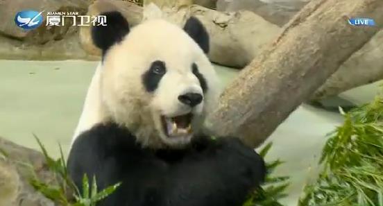 两岸新新闻 2019.08.30 - 厦门卫视 00:26:40