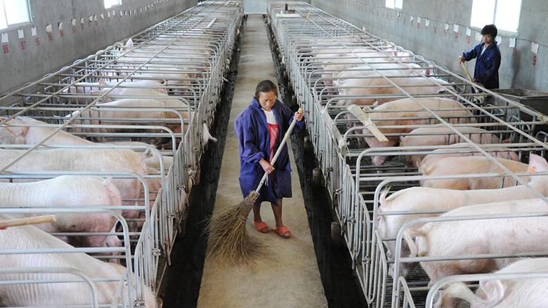 从4860万头到2亿头 养猪产能在疯狂扩张