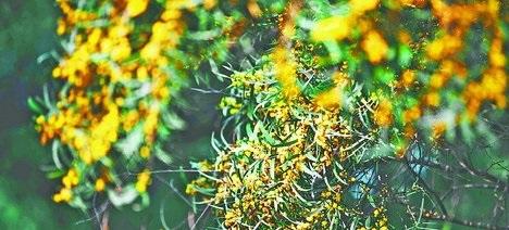 黄色花儿格外醒目。