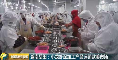 湖南岳阳:小龙虾深加工产品远销欧美市场