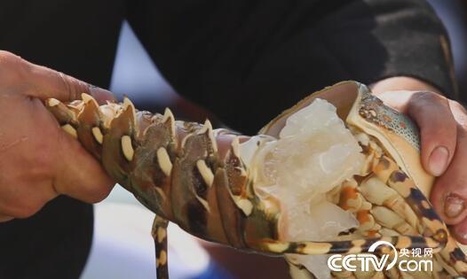 食尚大转盘:海南美味一锅鲜 5月26日