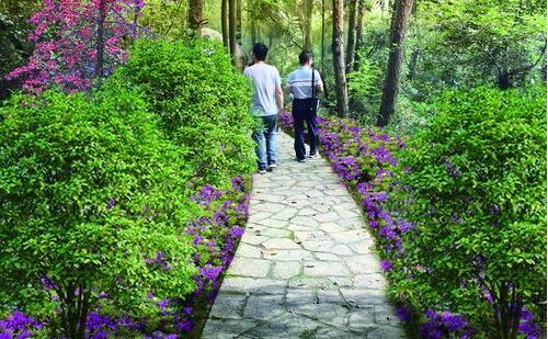 ●狐尾山涵香亭游步道