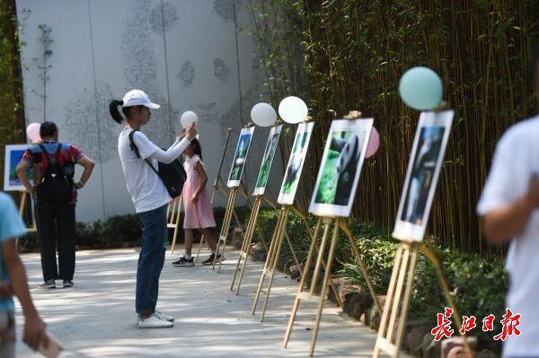 """""""春俏""""过生日,大熊猫馆外氛围布置 记者许巍巍摄"""