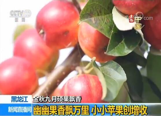 黑龙江:幽幽果香飘万里 小小苹果创增收