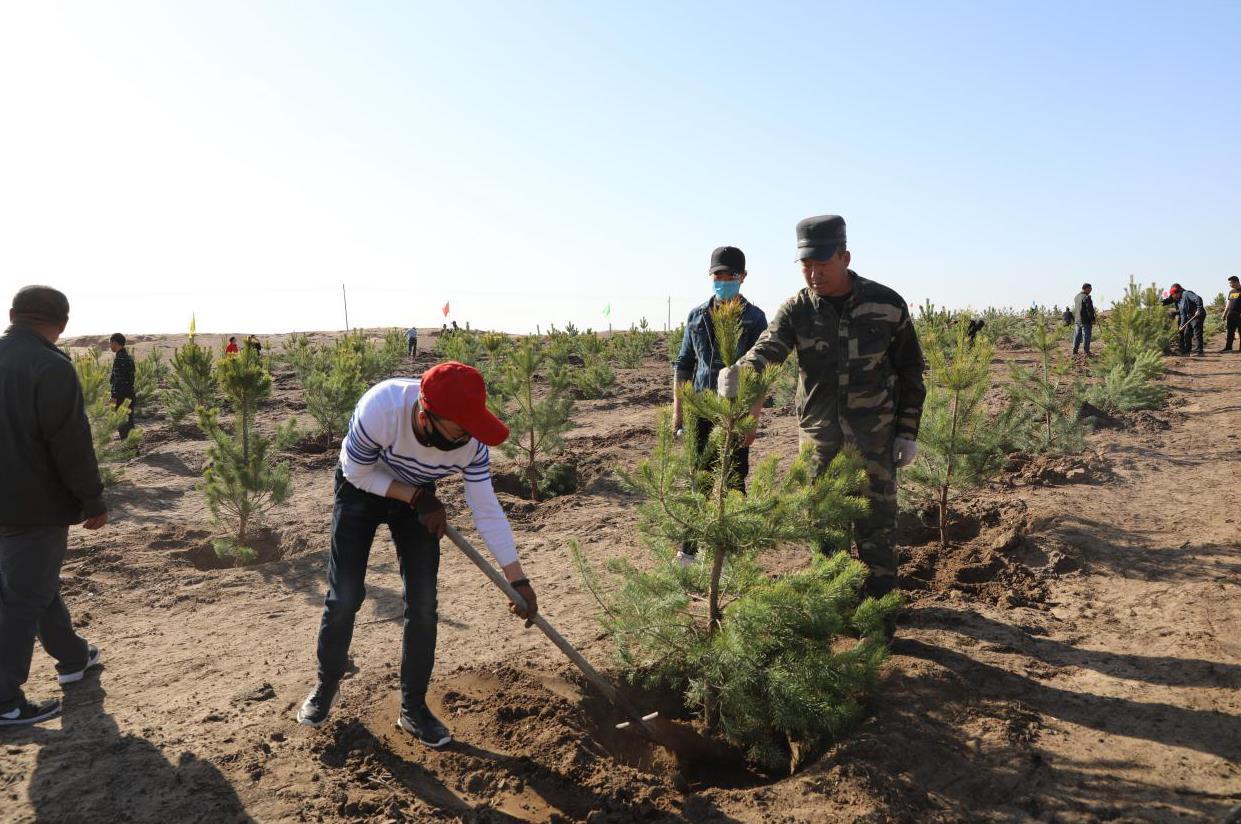 植樹造林 防風固沙