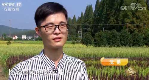 从国外退学种水稻 他的稻田里色彩斑斓