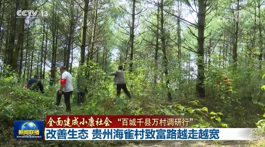 改善生态 贵州海雀村走出特色致富路