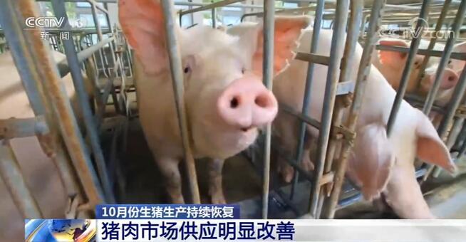 10月份能繁母猪存栏连续13个月增长 猪肉市场供应明显改善