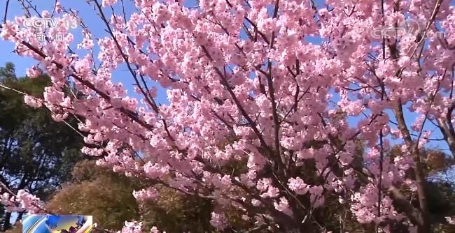 阳春三月春暖花开 这些打卡地不容错过