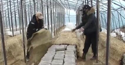 黑龙江东宁菌袋管理进入关键期 农技人员上门答疑